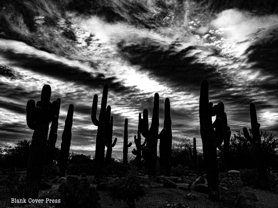Black and white photo of cacti